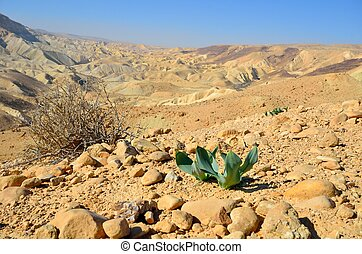 Desert spring - The first plants in the desert in the...