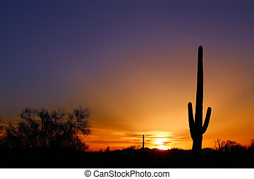 Desert sunset in Arizona - Saguaro Sunset in the Arizona...