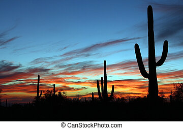 Desert Sunset - Saguaro cactus silhouette by an Arizona...