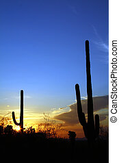 Desert Sunset - Sonoran Desert  Tucson Mountain Park