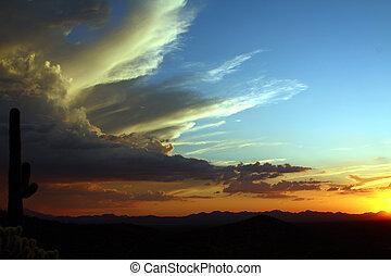Sonoran Desert Tucson Mountain Park