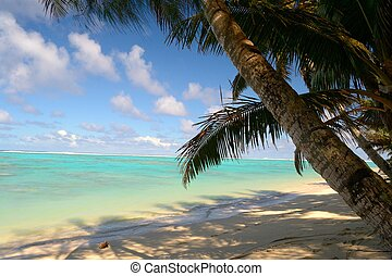 Desert tropical beach - The gorgeous turquoise sea in ...