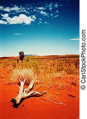 desert wild
