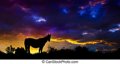 desert., wildes pferd, nevada, mustang