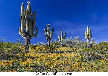 Desert Wildflowers and Saguaro Cacti in Arizona