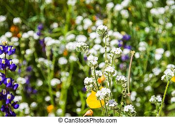 Desert Wildflowers in Sunlight