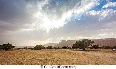 Desert Wildlife National Park near Ejlat, Israel