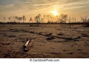 desert with burned tree
