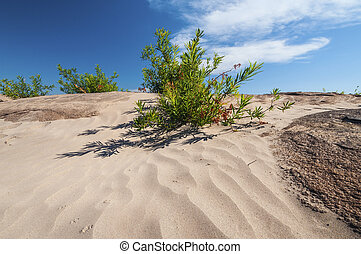 desert with small tree in blue sky