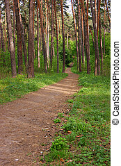 deserted path in the pine forest