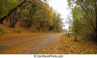 Deserted Road In Autumn Forest Covered With Yellow Leaves