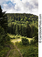 Deserted Road To The Depths Of A Forest. - Deserted Road To...