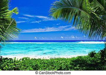 Deserted tropical beach lagoon framed by palm trees