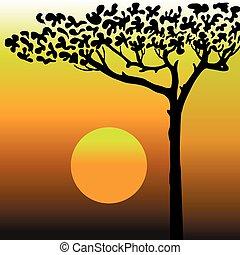 deserto, albero