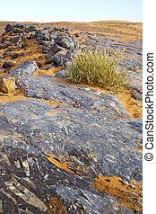 deserto, bush, fóssil, antigas
