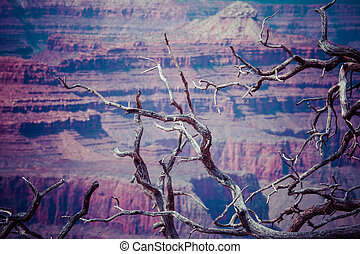desfiladeiro grandioso parque nacional, arizoan, eua