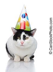 desgastar, coloridos, boné, gato, aniversário, encantador, balões