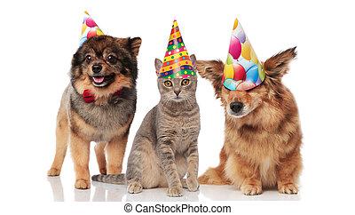 desgastar, engraçado, bonés, partido aniversário, gato, cachorros