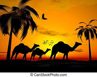 desierto, ocaso, egipto