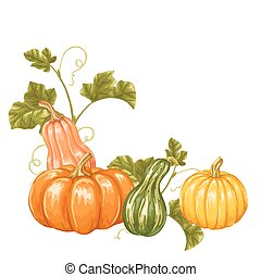 Design element with pumpkins. Decorative ornament from vegetables and leaves