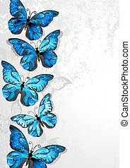 Design with blue butterflies morpho