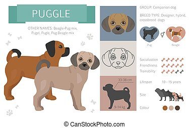 Designer, crossbreed, hybrid mix dogs collection isolated on white. Flat style clipart set. Vector illustration