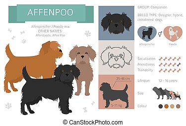 Designer dogs, crossbreed, hybrid mix pooches collection isolated on white. Affenpoo flat style clipart infographic. Vector illustration