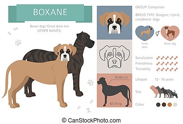 Designer dogs, crossbreed, hybrid mix pooches collection isolated on white. Boxane flat style clipart infographic. Vector illustration
