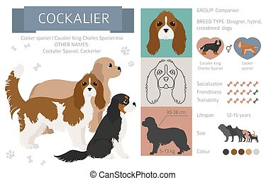 Designer dogs, crossbreed, hybrid mix pooches collection isolated on white. Cockalier flat style clipart infographic. Vector illustration