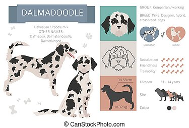 Designer dogs, crossbreed, hybrid mix pooches collection isolated on white. Dalmadoodle flat style clipart infographic. Vector illustration