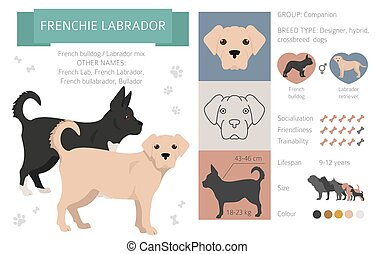 Designer dogs, crossbreed, hybrid mix pooches collection isolated on white. Frenchie labrador flat style clipart infographic. Vector illustration