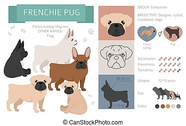 Designer dogs, crossbreed, hybrid mix pooches collection isolated on white. Frenchie pug flat style clipart infographic. Vector illustration