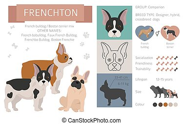 Designer dogs, crossbreed, hybrid mix pooches collection isolated on white. Frenchton flat style clipart infographic. Vector illustration