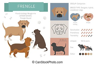 Designer dogs, crossbreed, hybrid mix pooches collection isolated on white. Frengle flat style clipart infographic. Vector illustration