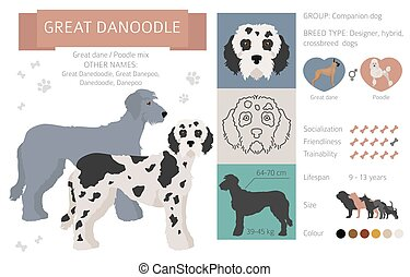 Designer dogs, crossbreed, hybrid mix pooches collection isolated on white. Great danoodle flat style clipart infographic. Vector illustration