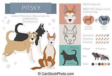 Designer dogs, crossbreed, hybrid mix pooches collection isolated on white. Pitsky flat style clipart infographic. Vector illustration