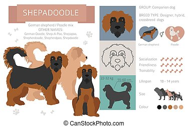 Designer dogs, crossbreed, hybrid mix pooches collection isolated on white. Shepadoodle flat style clipart infographic. Vector illustration