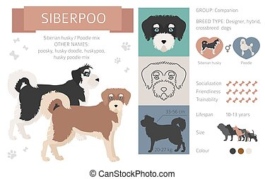 Designer dogs, crossbreed, hybrid mix pooches collection isolated on white. Siberpoo flat style clipart infographic. Vector illustration