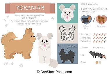 Designer dogs, crossbreed, hybrid mix pooches collection isolated on white. Yoranian clipart infographic. Vector illustration
