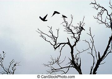 desligado, voando, sombra, pássaros