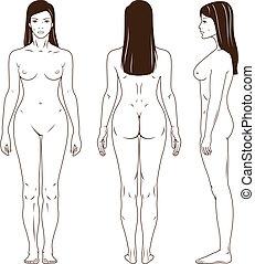 desnudo, posición, mujer, vector