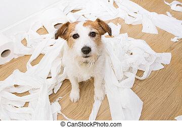 desobedecer, expresión, juego, culpable, gato, desenrollar, concept., gu, servicio, russell, paper., mischief., perro, después
