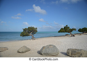 Desolate Eagle Beach in Aruba