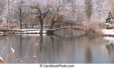Desolate Frosty bulrushes in winte
