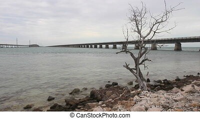Desolate Landscape - A single dead tree on a rocky shore, ...