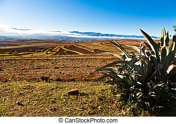 Desolate mountain landscape with catus in front