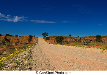 desolated road through the kalahari dunes with yellow flowers