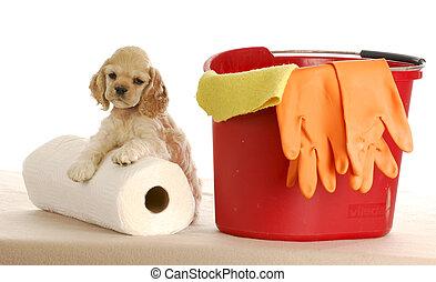 después, limpieza, perrito, arriba