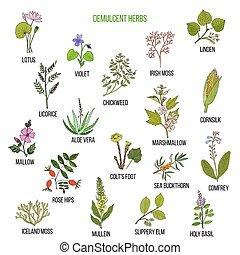 dessiné, ensemble, herbs., demulcent, main