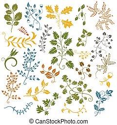 dessiné, flowers., décoratif, elements., illustration, feuilles, main, vecteur, ensemble